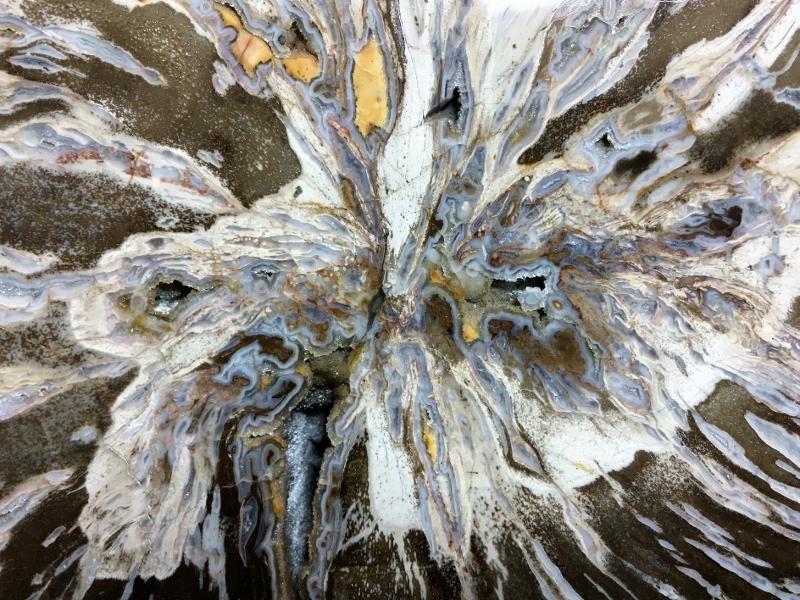 Cœur du bois fossile du Lot.