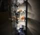 La vitrine d'exposition des bois fossiles.