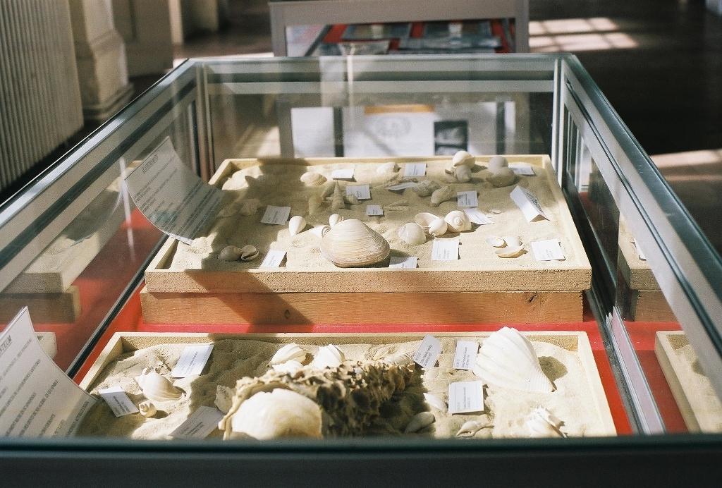 38- Novembre 1998 Exposition sur le Lutétien