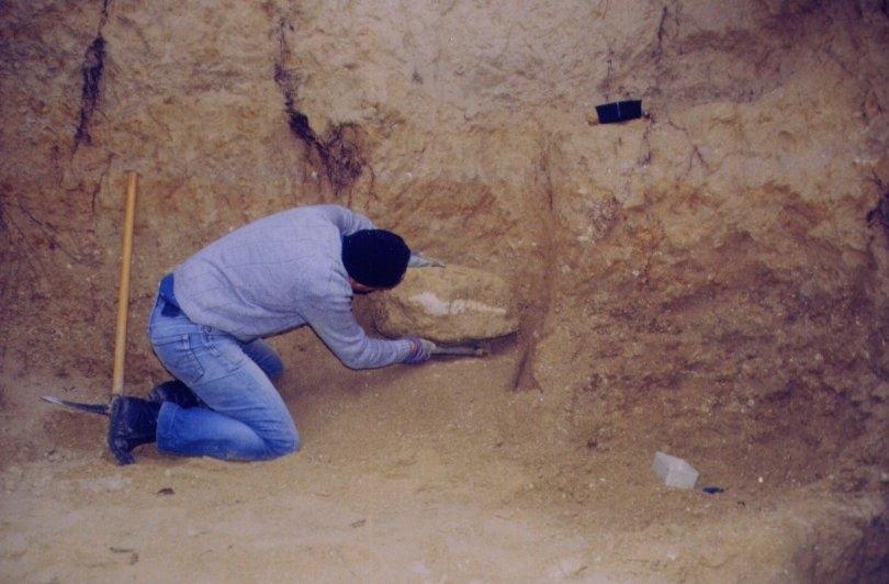 1998 - Fossile en place