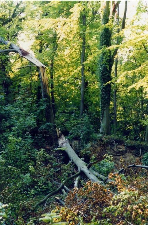 1991 - Après la tempète