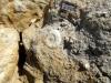 Ammonite et bélemnites dans l'Aalénien - Photo Aude