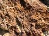 Zone indurée et riche en oxydes de fer dans l'Aalénien - Photo Aude