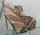 Museum Autun - Callipteridium gigas