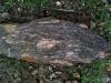 06-15 Micaschistes et gneiss, au-dessus de Castelnau-Pégayrols