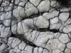 06-19 Saint Léons, site (BA2) à empreintes de dinosaures, Grallator minusculus, Hettangien.
