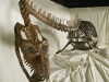 09-19 Occitanosaurustournemirensis - Elasmosaure du Toarcien supérieur Photo Site du Musée de Millau