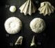 MHN de la Rochelle: 10 Neithea striacostata - Campanien Royan -15 Temnocidaris sceptifera Campanien Jarnac  16 Phymosoma magnificum id