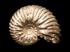 05-Ammonite (prov. Aveyron). Collection Michel Nguyen. Photo François H. Nicoly