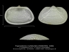 BI110-56 Trigonodesma multidentata