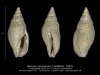 GA202-18 Mitreola monodonta