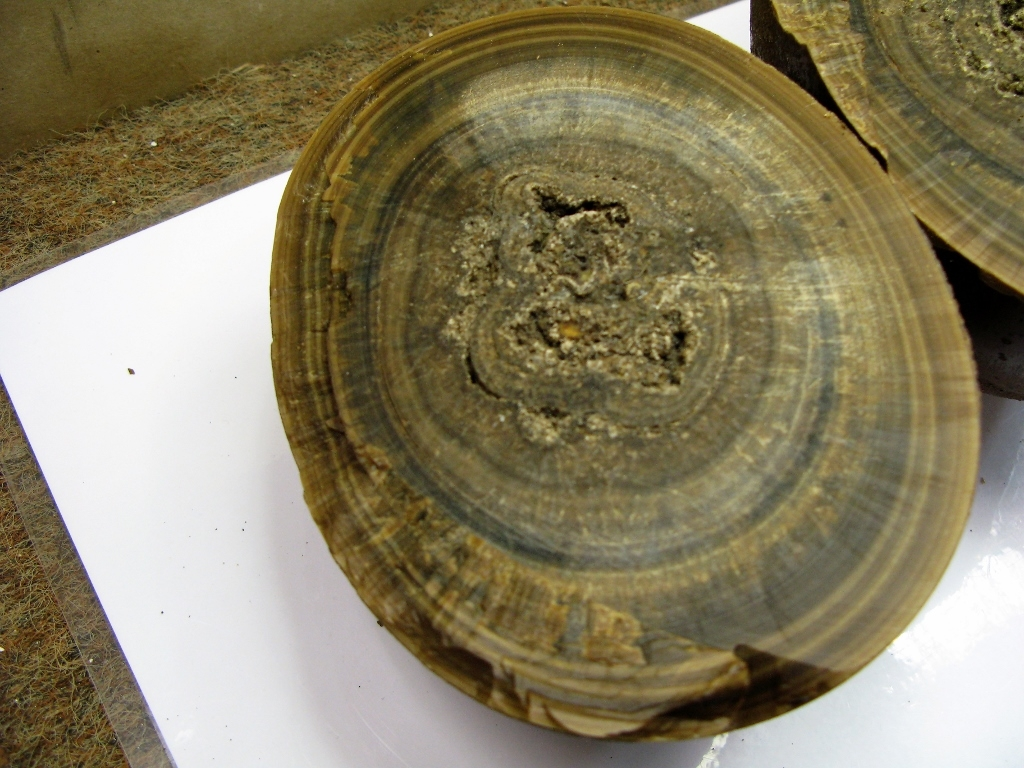 L'intérieur évoque la structure fibreuse et rayonnante des rostres de bélemnites ; l'aspect chatoyant évoque également 'l'œil de tigre' et l'ordonnancement de ses fibres soyeuses jaunes à brunes