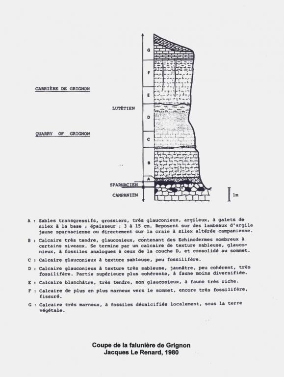 Grignon, coupe Le Renard - 1980