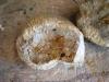 2-ammonite 1 détachée du bloc
