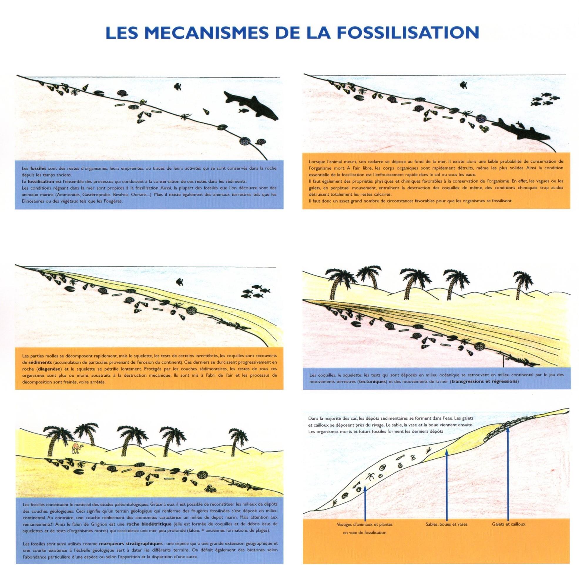 Les mécanismes de fossilisation