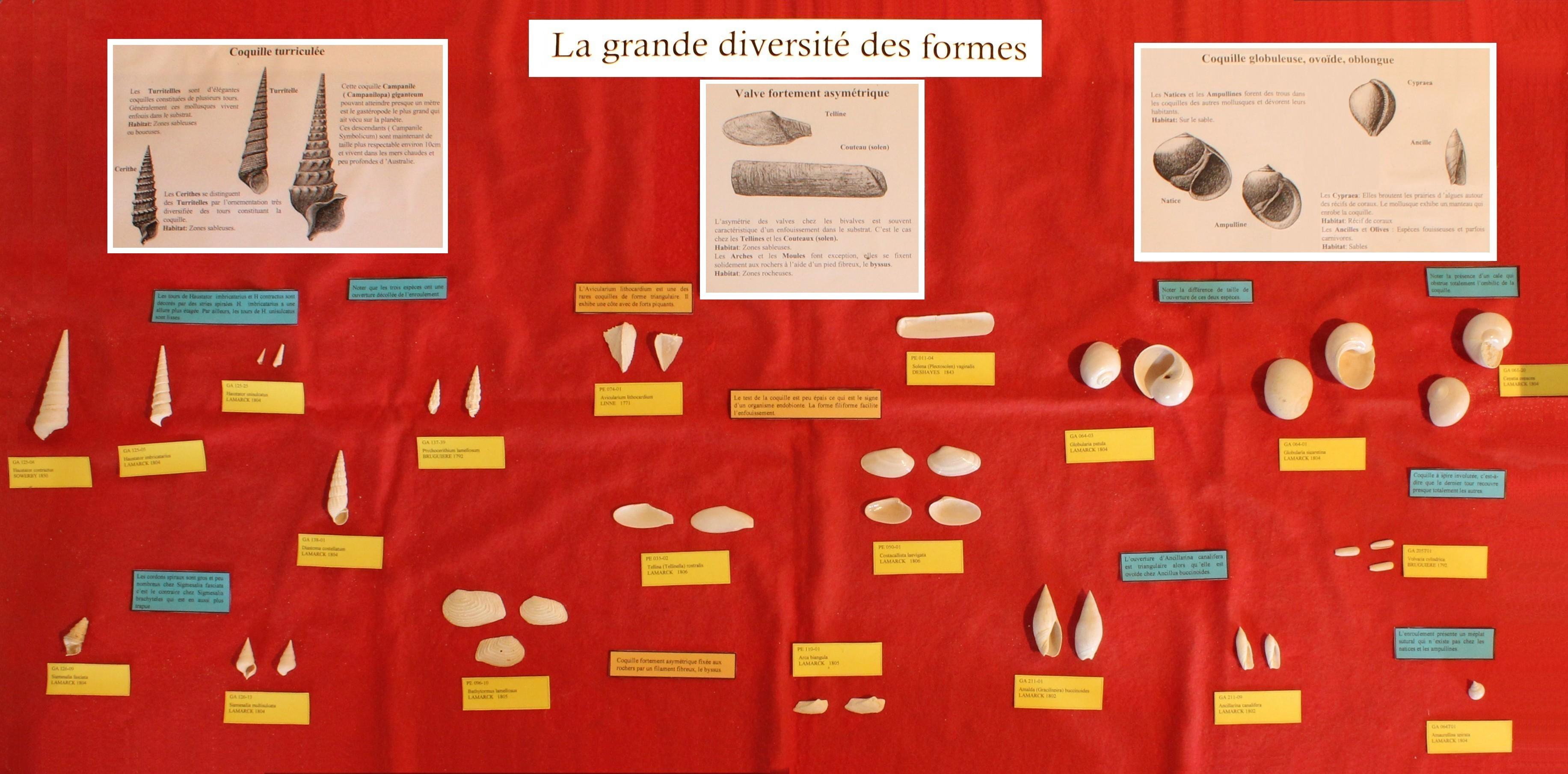 Vitrine : la grande diversité des formes