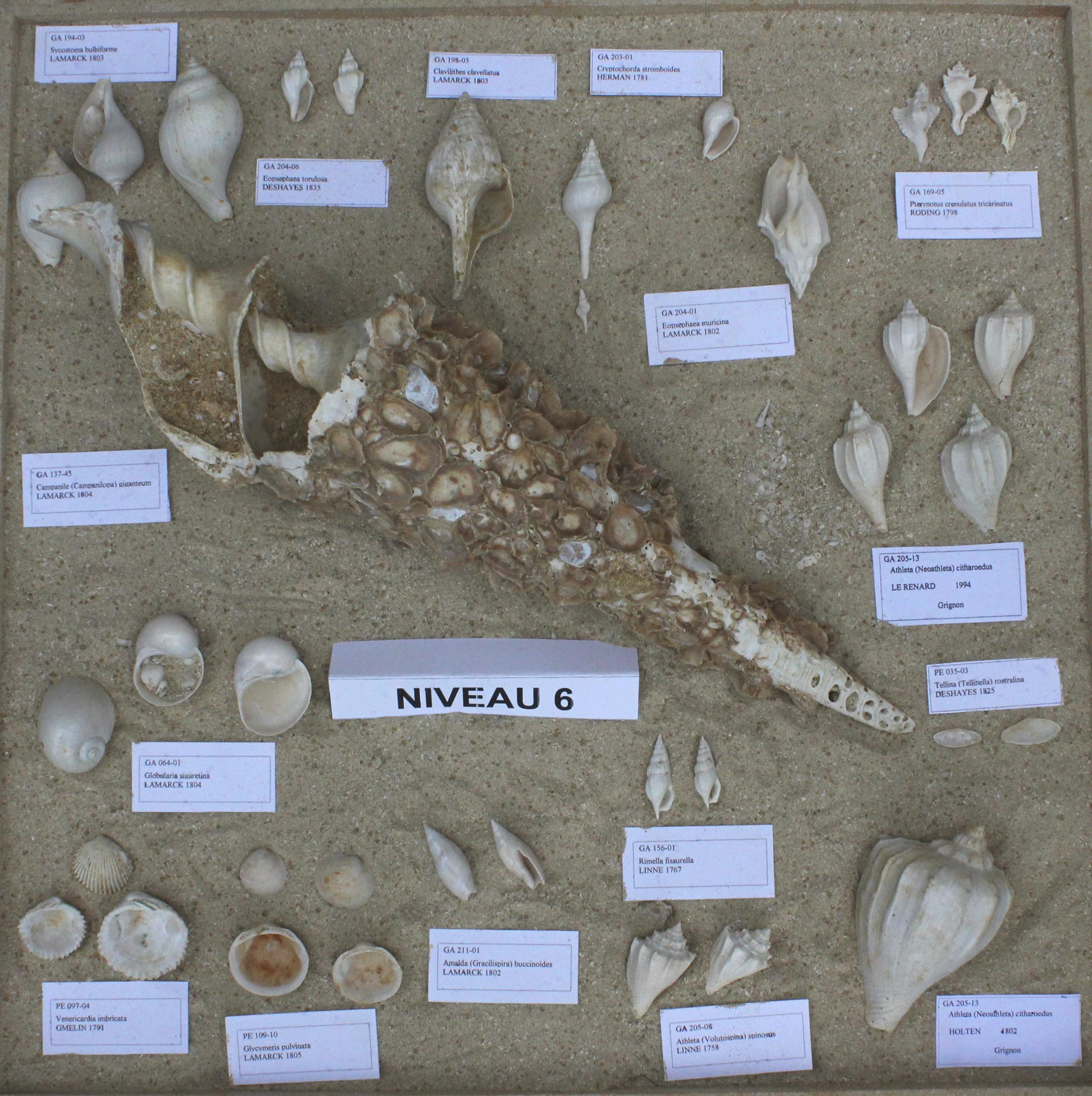 Fossiles du Niveau 06