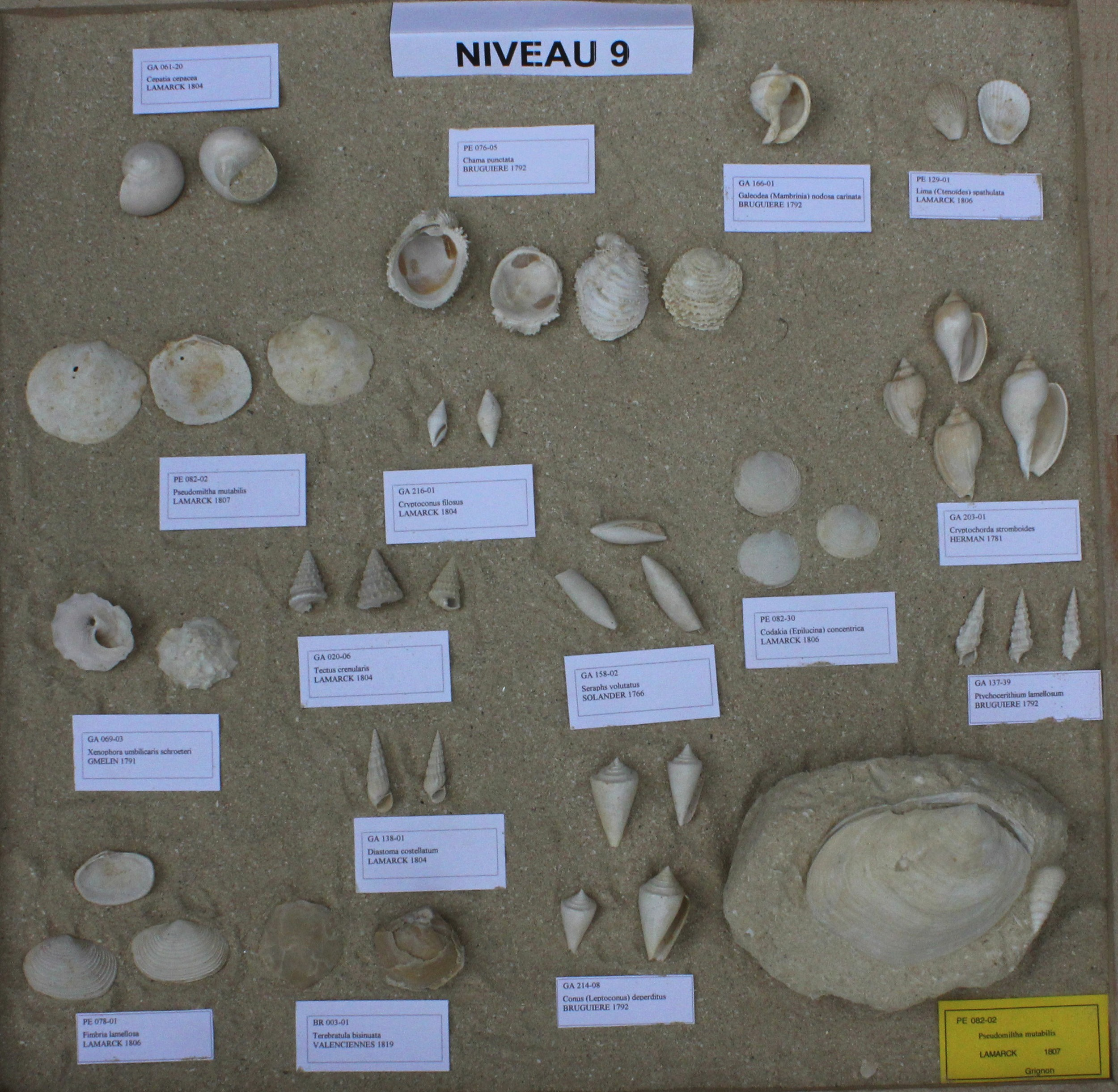Fossiles du Niveau 09
