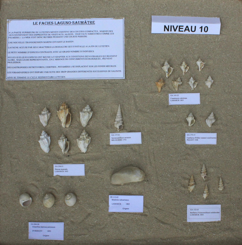 Fossiles du Niveau 10