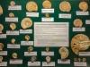 Ammonites du Bajocien Normand- Pièces de Jacques