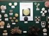 Oursins actuels et fossiles - Pièces de Michel