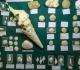 Fossiles de Grignon et Oursins du Bassin Parisien - Pièces Grignon du Club et oursins de Tadeusz