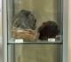 Vitrine bois fossile - pièces Michel