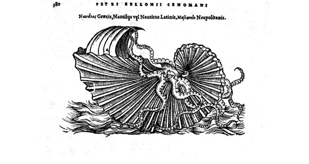 "Belon Pierre  \""De aquatilibus libri duo\"" - bois ; argonaute voguant sur la mer (1553)"