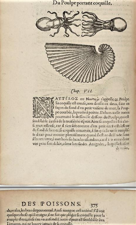 """Rondelet  Guillaume """"Histoire entière des poissons"""" VF (1558)"""