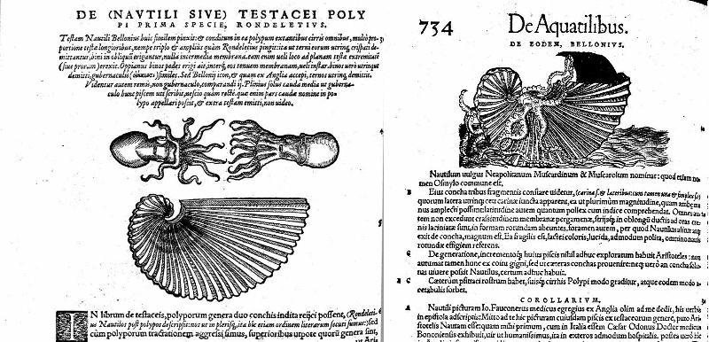 "Conrad Gesner -  ""Historiae animalium"" Livre III (1558)"