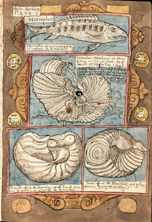 """Coenen Adriaen """"Viestock"""" (Livre des poissons) - 1580 . Extraordinaire bestiaire manuscrit, dessiné et peint à la main."""