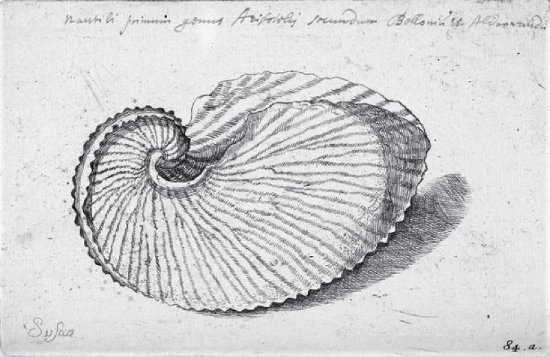 "Lister Martin ""De Cochleis tam terrestribus"" (1685)  Signature de Suzanna Lister - Crédit The Bodleian Library University of Oxford."