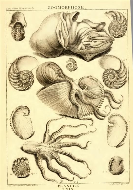 """Dezallier d'Argenville - Planches """"zoomorphose"""" (1780)"""