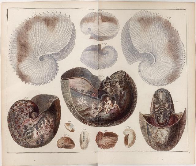"""Seba Albert """"Locpletissimi rerum naturalium thesauri"""" (1758) - Argonautes et Nautiles"""