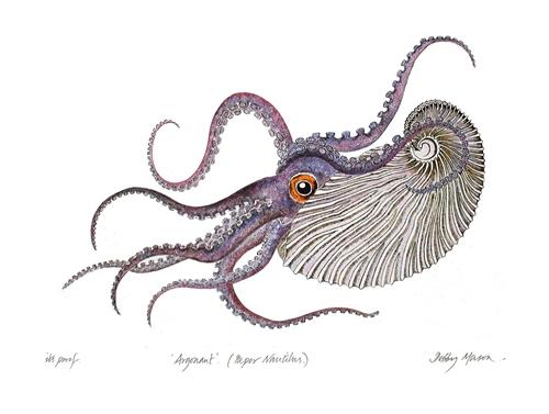 Illustration d'Argonaute - Debby Mason