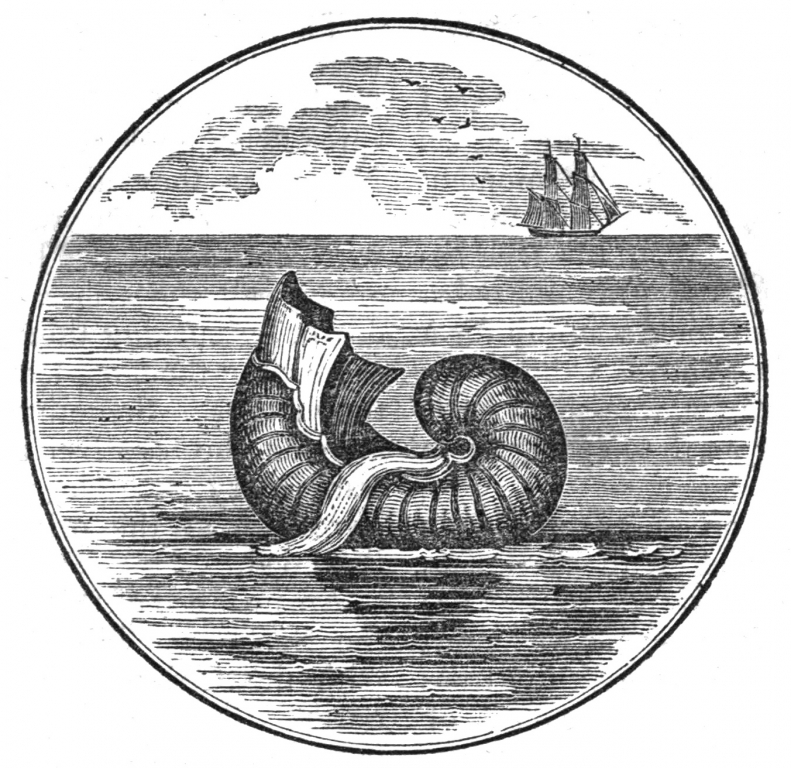 Argonaute papiracé - Merry's museum (1842)