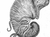 """Aldrovandi Ulyssis  """"De reliquis animalibus exanguibus libri quatuor"""" (1606)"""
