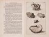 "Rumphius ""D'Amboinshe rariteitkamer"" (1705)"
