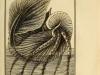 Monfort Histoire naturelle - Argonaute papiracé (1802)