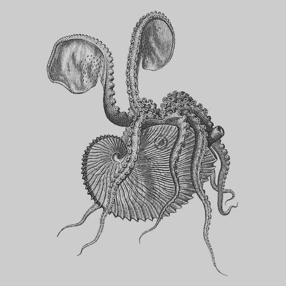 """J.-C. Chenu """"Illustrations conchyliologiques"""" (1842)"""