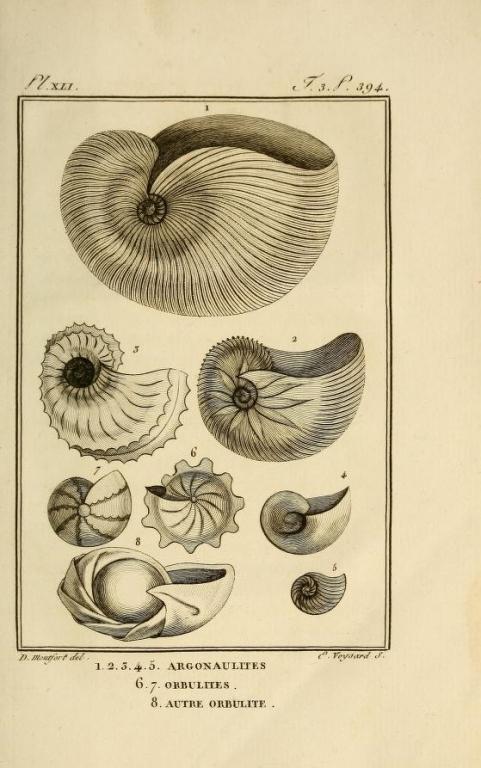 Monfort Histoire naturelle - Argonautes et Nautiles (1802)