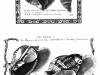lisner Planche extraite historiae conchiliorum Lister Martin 1770