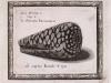 lisner ed 1685 rhombis reticulatis(conus marmoreus) the Royal Society London