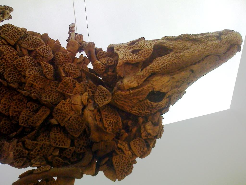 messel 2013 - Diplocynodon darwini (crocodile) - Photo jacques Dillon