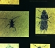 messel 2013 - Insectes - Photo jacques Dillon