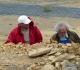 Jean Pierre et Jacques à l'oeuvre dans le filon de bois fossile repéré par Jean Pierre