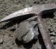 Loge de nautile épigénisée en calcilte