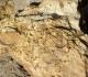 Surface durcie et perforations dans calcaire bioclastique du Toarcien