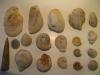 Récolte de Jacques: Bivalves, Brochiopodes et ammonites à identifier. Photo Jacques Dillon