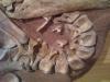 Dinosaure Tenontosaure 3- jurassique USA